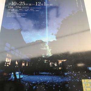 京都旅行!青蓮院門跡 ライトアップ