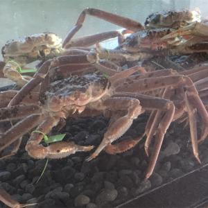 蟹食べに行って来ました〜♪