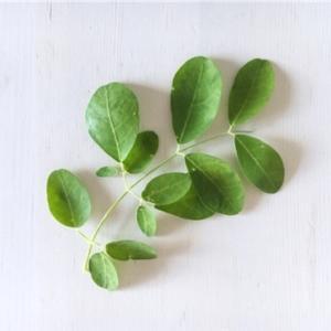 90種類もの栄養素を含む奇跡の木🌲「モリンガ」