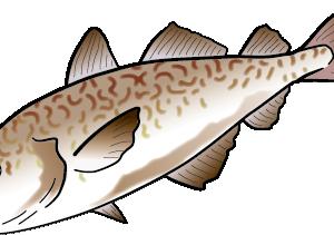 【デトックス】タラの肝油は『鱈の肝臓の脂肪』でした