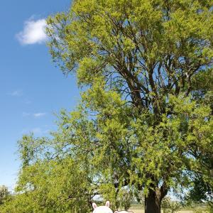〈子育て〉権兵衛さんのあかちゃんが風邪ひいた 手遊び歌 〈子育て〉大きな木の下でお弁当を食べてみよう🍱