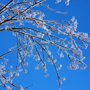 💎氷の世界💎 キラキラツララ 凍った木と車 〈子育て〉ひな祭り🎎