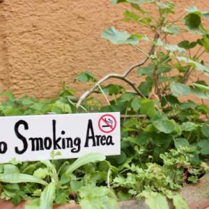 タバコの断捨離 いかがでしょうか?