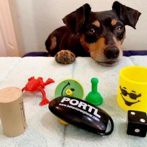 犬にはエラーレスラーニングが効果的!