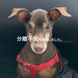【犬の問題行動】犬の分離不安にもタイプがある?