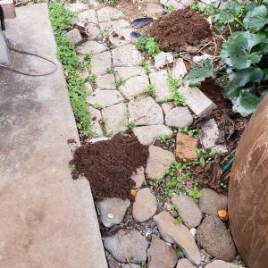 庭はもぐらの穴だらけ