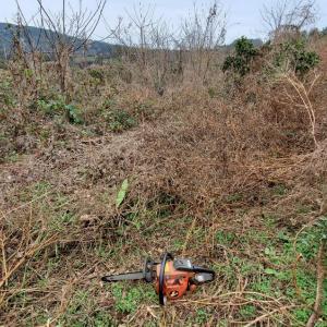 今日から耕作放棄地の開墾、キクラゲも大量ゲット