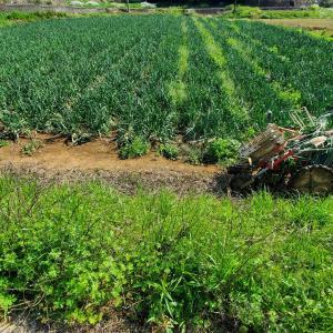 除草剤の効果