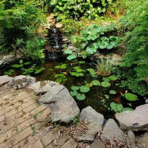 熱帯睡蓮と蓮池に投入&プラナリアで卵壊滅