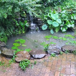 大雨で池濁る