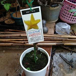庭のモミジをカミキリ虫から守りたい、あと新しく買った木々紹介