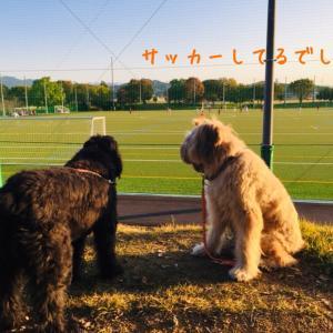 橿原運動公園でお散歩