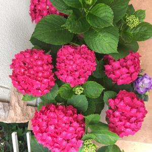 お庭のお花と癒しのワンコ