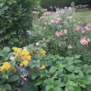 庭先の花々