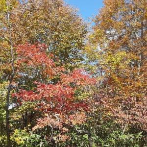 グランデコリゾートの紅葉