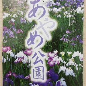 長井のアヤメ園