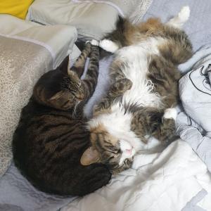 やっぱり猫が好き♡我が家のアイドル、猫特集。