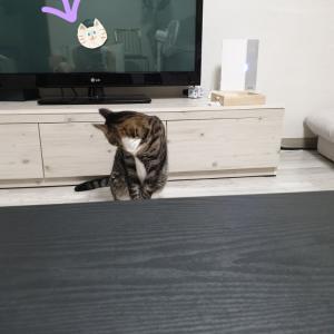 テレビに映り込むスケキヨ