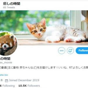 面白い可愛い人気のツイッターおすすめ!アカウント 14選!犬猫編 仕事や勉強の息抜きに!
