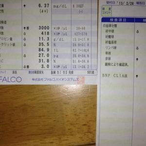 血液検査 基準値