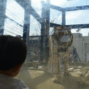 虎の子のためにジュニアNISA始めました