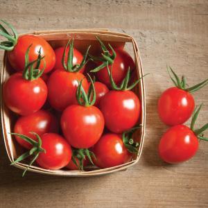 tomato作り始めました
