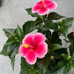刹那的なこの花、知っていましたか?
