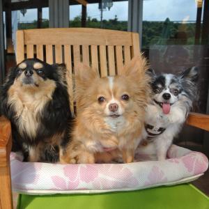 【犬の足裏バリカン】何ミリ?頻度は?ママも簡単おすすめのやり方