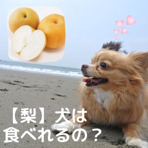 【梨】犬が食べていい?量や皮など、怖い梨アレルギー注意点3つ