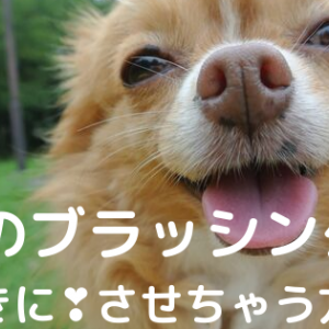 【犬のブラッシング嫌がる】を、好きにさせちゃう!やり方