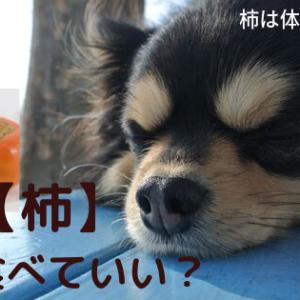 【柿】犬は食べていい?絶対知って欲しい!柿を食べる時4つの注意