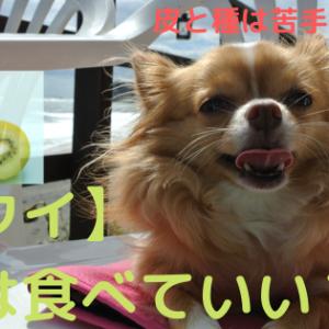【キウイ】犬は食べていい?キウイフルーツ種はダメ!注意点6つ