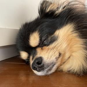チワワブログ♡台風!玄関水漏れ防止!
