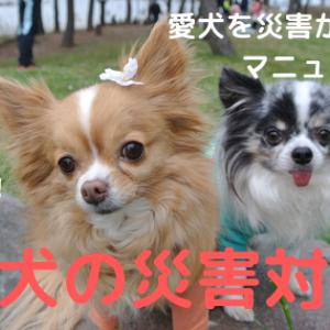 【犬の災害対策】愛犬と家族が安全に避難できるためのペットマニュアル!