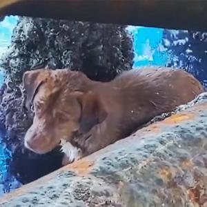 【海で犬を救出!】大海原220キロ漂流!石油掘削施設スタッフ発見