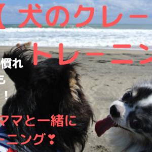 【犬のクレートトレーニング】必要?ママと愛犬が楽しくできる方法