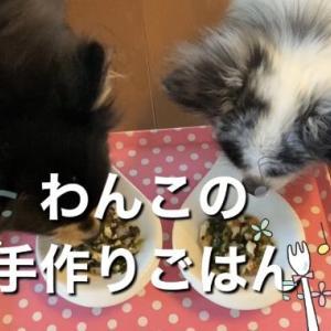 チワワブログ♡犬の手作りごはん【ネバネバ栄養たっぷり】老犬にオススメ