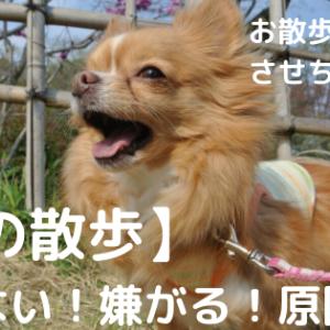 【犬の散歩】歩かない・嫌がる・引っ張るなどの原因は?