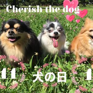 11月1日【犬の日】すべての犬を大切に!殺処分を減らすために出来る事