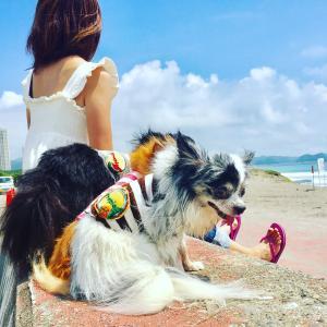 愛犬チワワと海