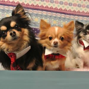 高齢の犬になると表彰される!小型犬18歳・中型犬15歳、長寿動物表彰される!