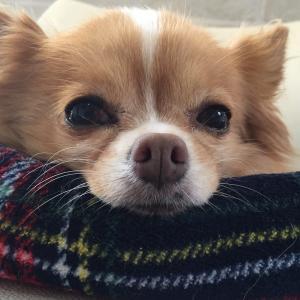 犬の外耳炎、中耳炎、内耳炎。知っておこう!犬の耳について。