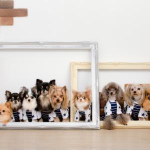 犬種別かかりやすい病気一覧!犬の遺伝性疾患一覧!