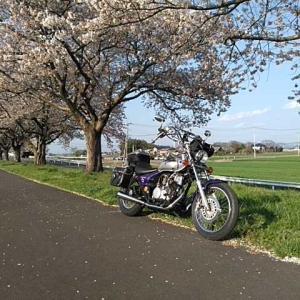 桜🌸は散りはじめて俺も散りたい。