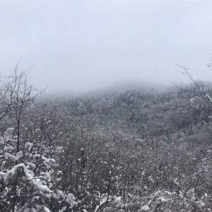 美の山公園《桜+雪》