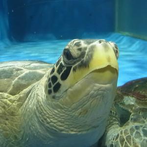 あさむし水族館にまたまた行ってきました!(青森県青森市浅虫)