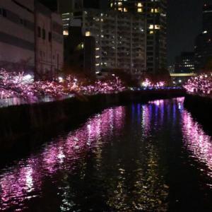 目黒川みんなのイルミネーション2019 (12月'19)