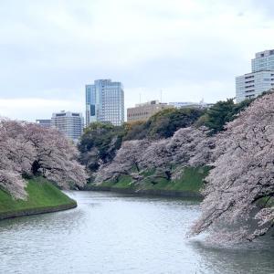 桜を求めて'20<13>千鳥ヶ淵 (3月27日'20)