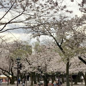 桜を求めて'20<14>靖国神社 (3月27日'20)