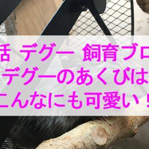 【28話】デグーのあくびはこんなにも可愛い!【デグー 飼育ブログ】